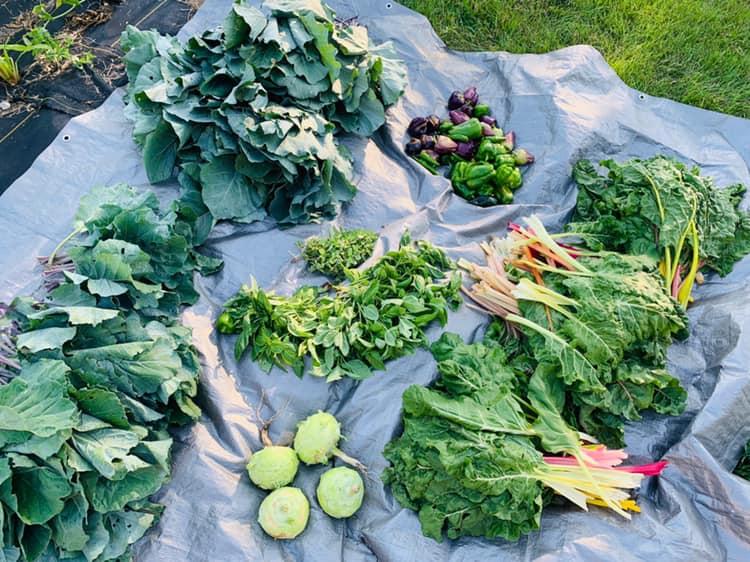 September Harvest Update